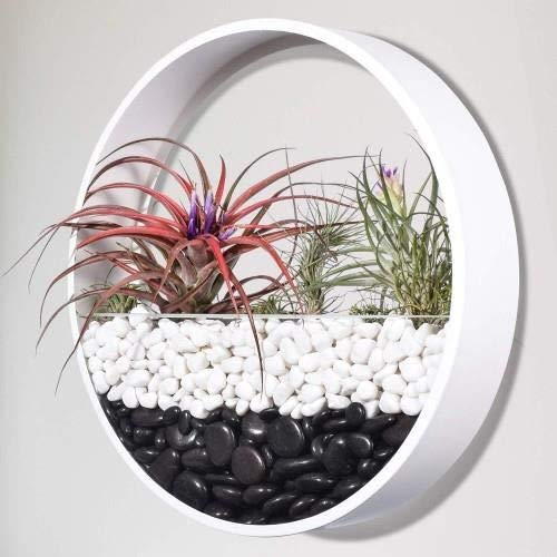 Buy Ecosides Modern Wall Planters Wall Mounted Vase Plant Holder Round Flower Pot Metal Freestanding Indoor Container Baskets Terrarium For Succulent Cactus Artificial Flowers Air Plants Large White Online In Bahrain B07vsmv1ny